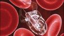 Detectar el E.coli o la salmonela con nanotecnología