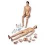 Anatomía y Material de Prácticas