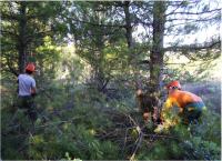Más bioenergía, menos incendios forestales en España.