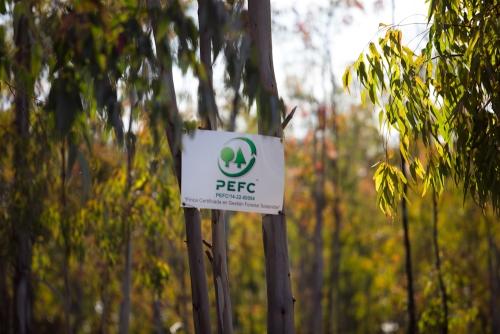 PEFC España y AVEBIOM se alían para impulsar la biomasa