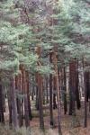 AVEBIOM apoya una fiscalidad forestal específica que apoye el uso energético de la biomasa