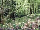 Gestionar la biomasa y prevenir incendios forestales en Galicia