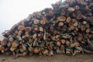 Aumentan la producción y consumo de biomasa en Cataluña
