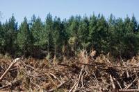 subvenciones labores forestales Galicia