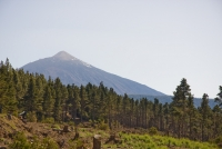 El primer centro logístico de biomasa de Canarias se construirá en Tenerife