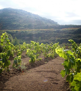 Salud to Spain: The new conquistadors of wine