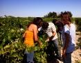 Visita viñedo