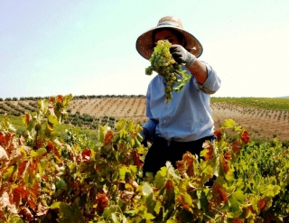 La agricultura española envejece mas rapido que el resto de la U.E.