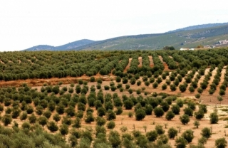 La Junta propone una reducción de módulos para la agricultura andaluza