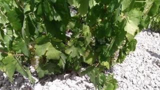 Recarga de la tarjeta del viticultor Montilla-Moriles 2017