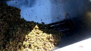 Cómo elaboramos nuestros vinos blancos jóvenes y generosos