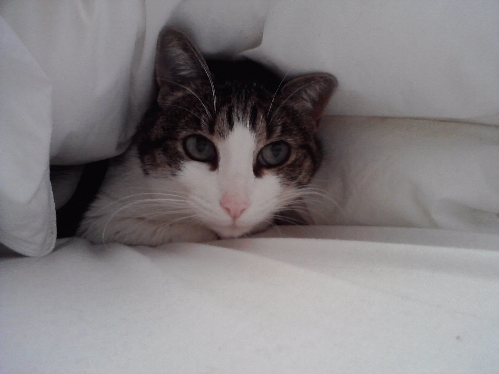 gato sofa