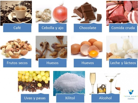 Alimentos toxicos para las mascotas