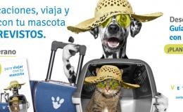 Viaje seguro mascotas