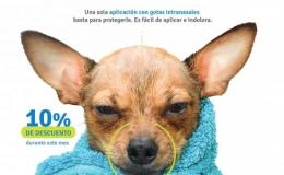 Gripe canina traqueobronquitis infecciosa