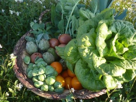 Entra en la cocina ecológica de la Finca San Agustín