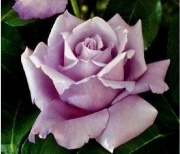 ROSAL CHARLES DE GAULLE ® Meilanein