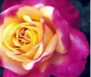 ROSAL PULLMAN ORIENT EXPRESS ® - Baipeace