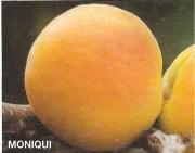 ALBARICOQUERO MONIQUI