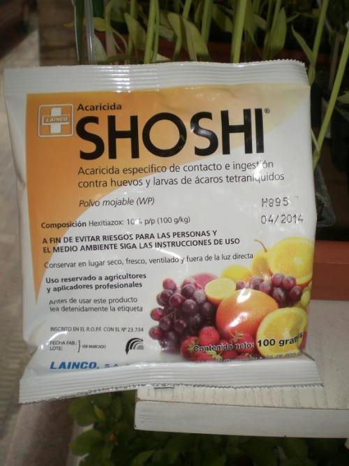 SHOSHI (100 gr.).