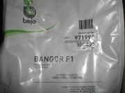 ZANAHORIA BANGOR