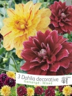 Dalias Decorativas y Decasplit