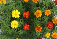 Plantel de Flores Tienda de Planta Desarrollada