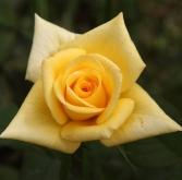 ROSAL MATILDA ® Fesun