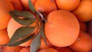 Venta Directa a Casa de Mandarinas y Naranjas.