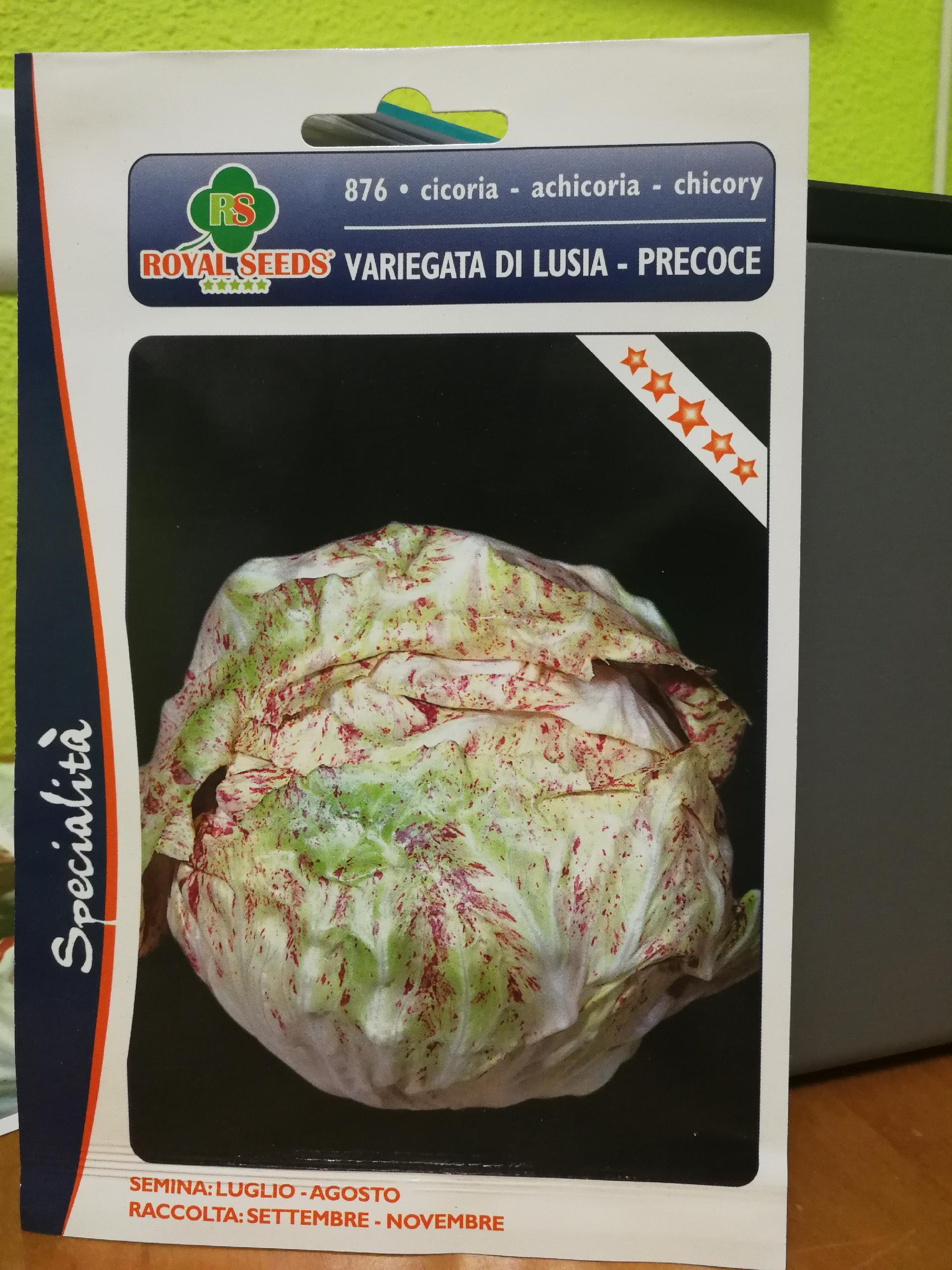 ACHICORIA VETEADA DE LUSIA PRECOZ (Cerca de 1,5 gr.).