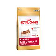 Cavalier king Charles Adult