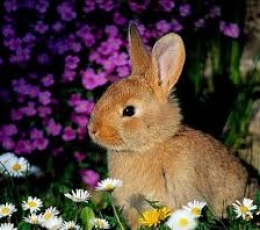 Pienso Conejos