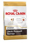 Jack russell junior