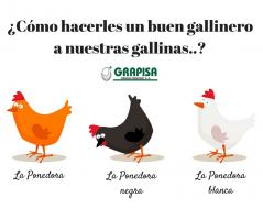 Cómo hacerles un buen gallinero a nuestras gallinas