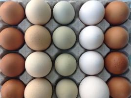 Evolución del Sector avícola de puesta primer trimestre 2017