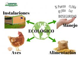 Huevos Ecológicos. Grandes Profesionales