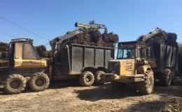 Producción de biomasa forestal