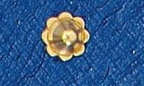 Rosca 5