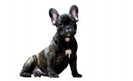 Seguro de animales - mascotas y perros peligrosos