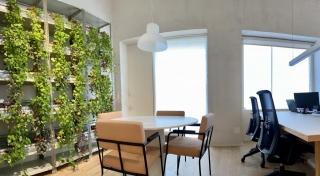 Nuestro jardin vertical nos aporta serenidad