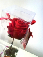 RED PRESERVED ROSE IN A BOX >3 years life