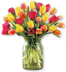 El cuidado de los tulipanes