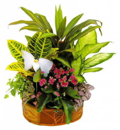 COLOURFULL BASKET OF PLANTS