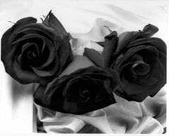 3 BLACK PRESEVED ROSES BOUQUET