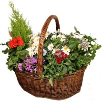 LARGE BASKET OF GARDEN PLANTS