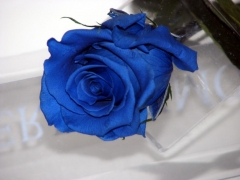 BLUE PRESERVED ROSE IN A BOX >3 years life