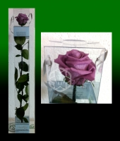 PURPLE ETERNAL ROSE IN A BOX