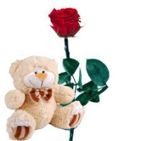 ROSE AND TEDDY BEAR