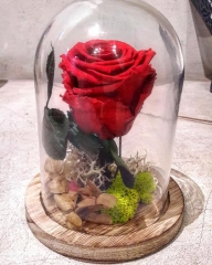 BEAUTY & BEAST  PRESERVED ROSE