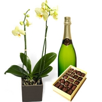 ORCHID , CHOCOLATES AND SPARKLING WINE